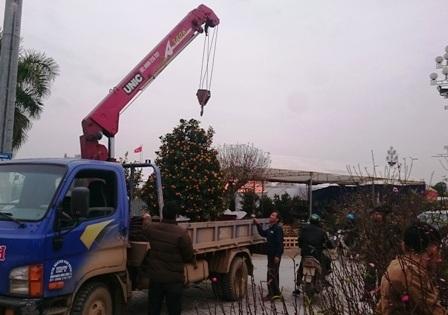 Có những cây cồng kềnh hơn phải thuê cả xe cẩu để vận chuyển hàng, nên chi phí vận chuyển cũng lớn hơn.