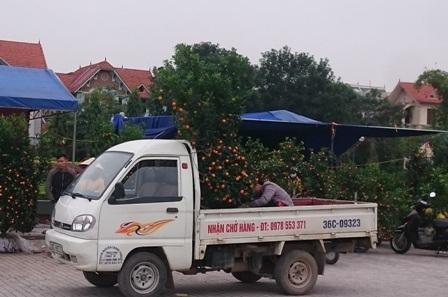 Việc vận chuyển chủ yếu bằng xe máy, nhưng tùy vào loại cây hay khách hàng chịu chi thì những chiếc xe tải nhỏ cũng là phương tiện vận chuyển rất cơ động