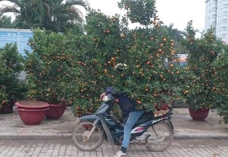 Nhiều người từ các huyện lân cận thành phố Thanh Hóa tranh thủ thời gian nhàn rỗi để kiếm thêm tiền tiêu Tết. Thời tiết giá lạnh nên việc vận chuyển hoa, cây cảnh cũng rất vất vả.