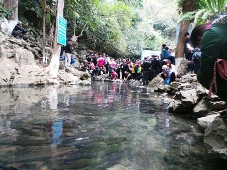 Một điều lạ lùng là những con cá ở suối Cẩm Lương chỉ bơi quanh quẩn đúng một đoạn suối dài hơn 100m và không bơi ra xa hơn nữa. Cá ở đoạn suối này đặc biệt chỉ ăn lá cây để sống chứ không ăn thịt đồng loại.