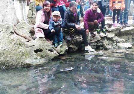 Du khách thích thú nhìn ngắm đàn cá rất thân thiện mỗi khi có người