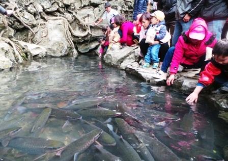Nhiều du khách sờ được cả lên người cá và vuốt ve cá thần