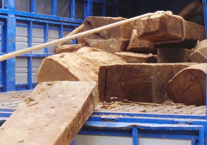 Kiểm lâm cho rằng chủ yếu là gỗ tạp?