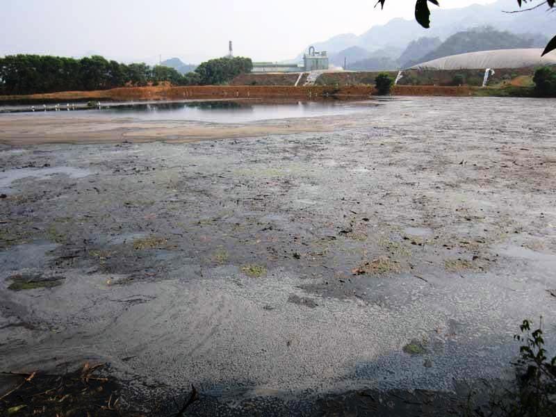 Công ty Cổ phần mía đường Hòa Bình nhận lỗi đã xả thải ra sông Bưởi.