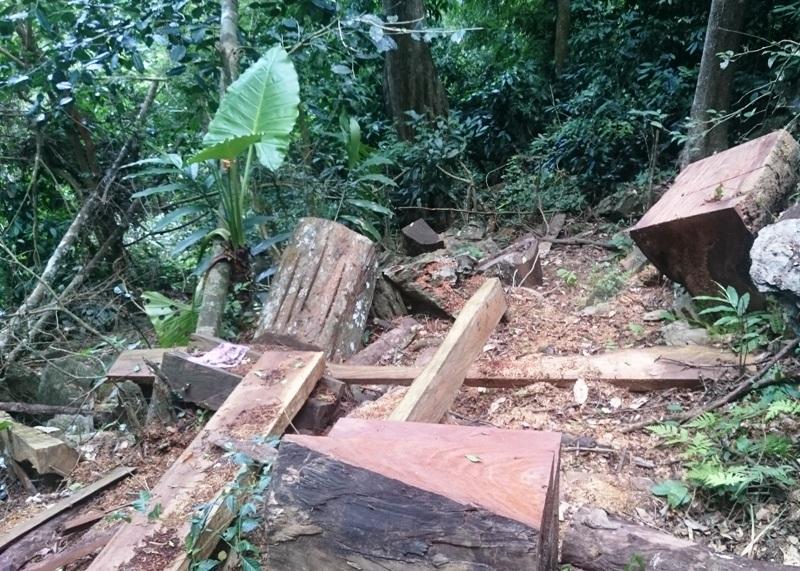 """""""Chảy máu"""" rừng đặc dụng trong khu bảo tồn thiên nhiên - 11"""