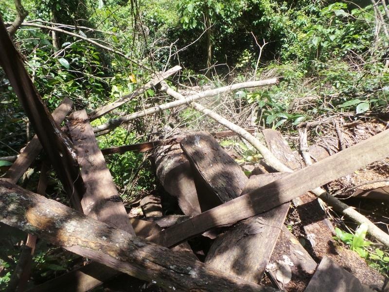 """""""Chảy máu"""" rừng đặc dụng trong khu bảo tồn thiên nhiên - 12"""