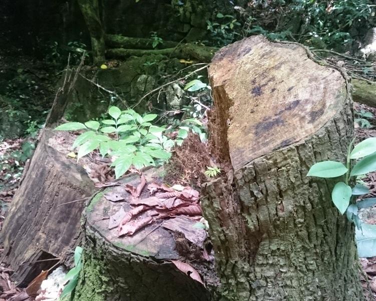"""""""Chảy máu"""" rừng đặc dụng trong khu bảo tồn thiên nhiên - 14"""