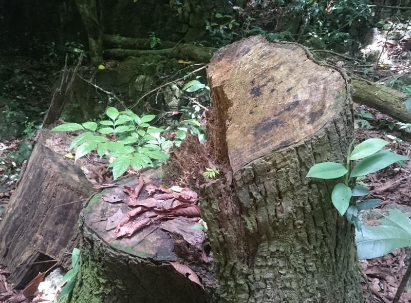 """Vụ rừng đặc dụng """"chảy máu"""": Chỉ khai thác nhỏ lẻ (!?) - 2"""