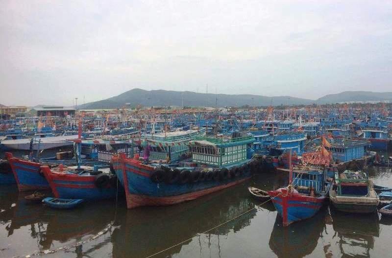 100% tàu thuyền của ngư dân Thanh Hóa đã vào nơi tránh trú bão