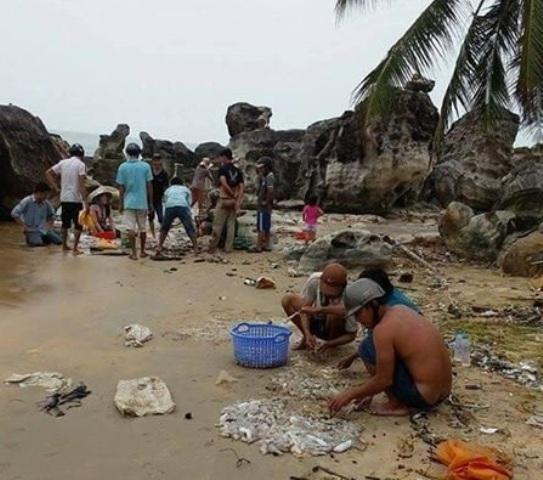 Người dân bắt hải sâm trôi dạt vào bờ.