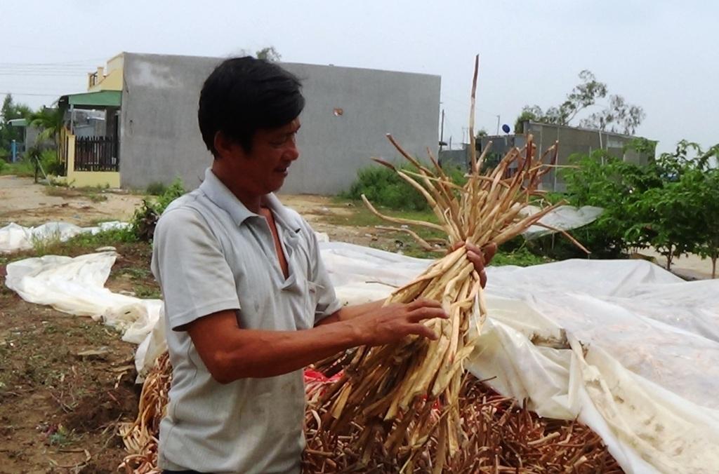 Chủ vựa lục bình Phạm Tấn Hữu không chỉ giải quyết công ăn việc làm cho hàng chục công nhân lao động địa phương mà còn bỏ túi 40 triệu đồng/tháng