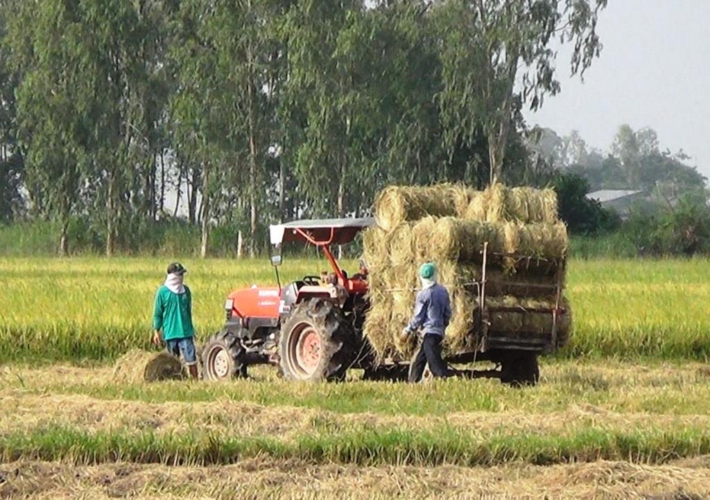 Những năm trước đây, rơm thường được nông dân đốt tại đồng, nay có nhiều người mua nên mỗi công (1.000m2) bán được 70.000 đồng