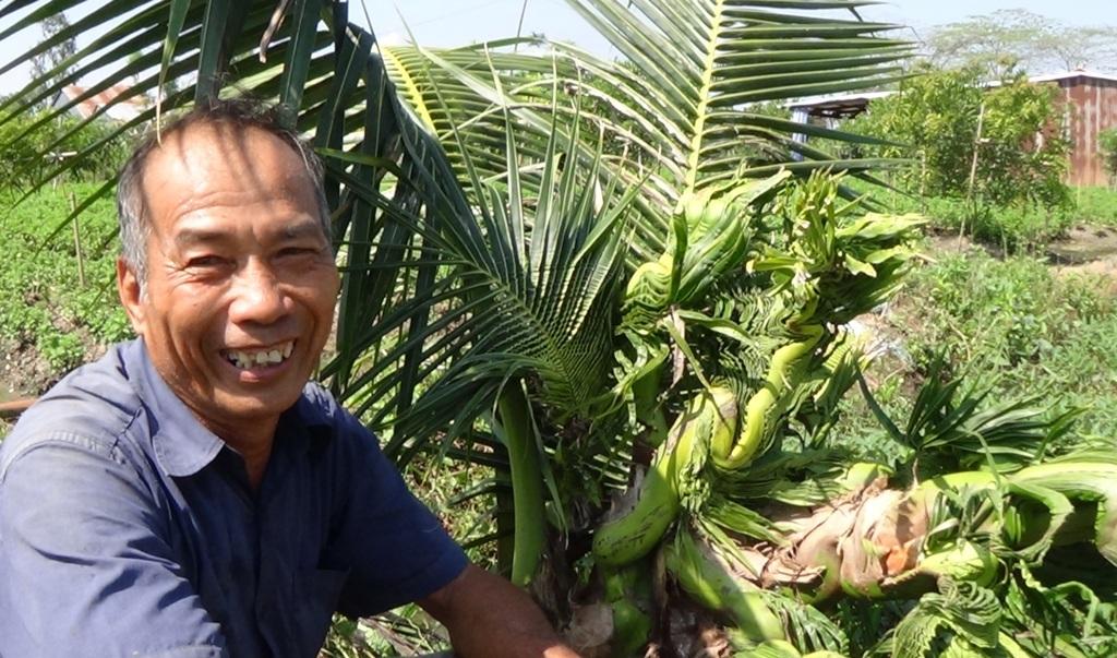 Kỳ lạ cây dừa đâm đọt thành hình… rồng, phụng - 3