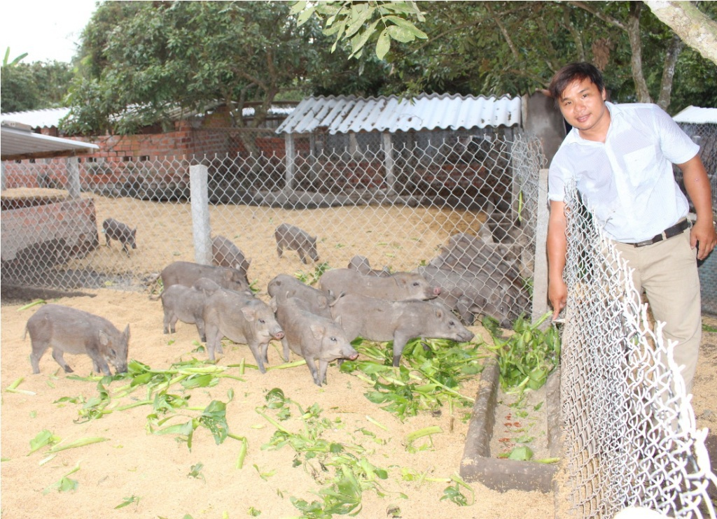 Sau khi tốt nghiệp đại học ngành Chăn nuôi, anh Đoàn Phan Dinh quyết định về quê nuôi heo rừng