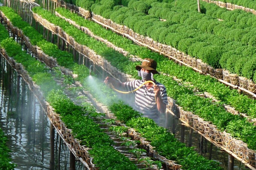 Để tiện chăm sóc cho vườn hoa tết của mình anh Huỳnh Văn Tuấn dựng chòi ngủ tại vườn.