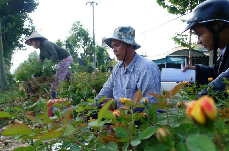 Anh Nguyễn Văn Hòa và những hộ trồng hoa hồng khác ở Sa Đéc cho rằng thời tiết nắngảnh hưởng rất nhiều đến thành bạimùa hoa tết.