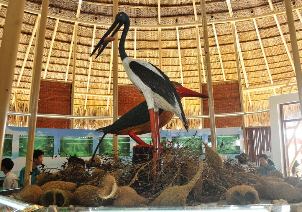"""Chiêm ngưỡng """"bảo tàng"""" trứng chim, cá đồng... ở Vườn Quốc gia Tràm Chim - 3"""