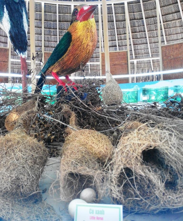 """Chiêm ngưỡng """"bảo tàng"""" trứng chim, cá đồng... ở Vườn Quốc gia Tràm Chim - 7"""