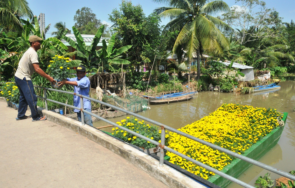 Anh Minh Sơn  đang đưa các chậu hoa Vạn thọ xuống chiếc chẹt để chở ra chợ Ô môn bán