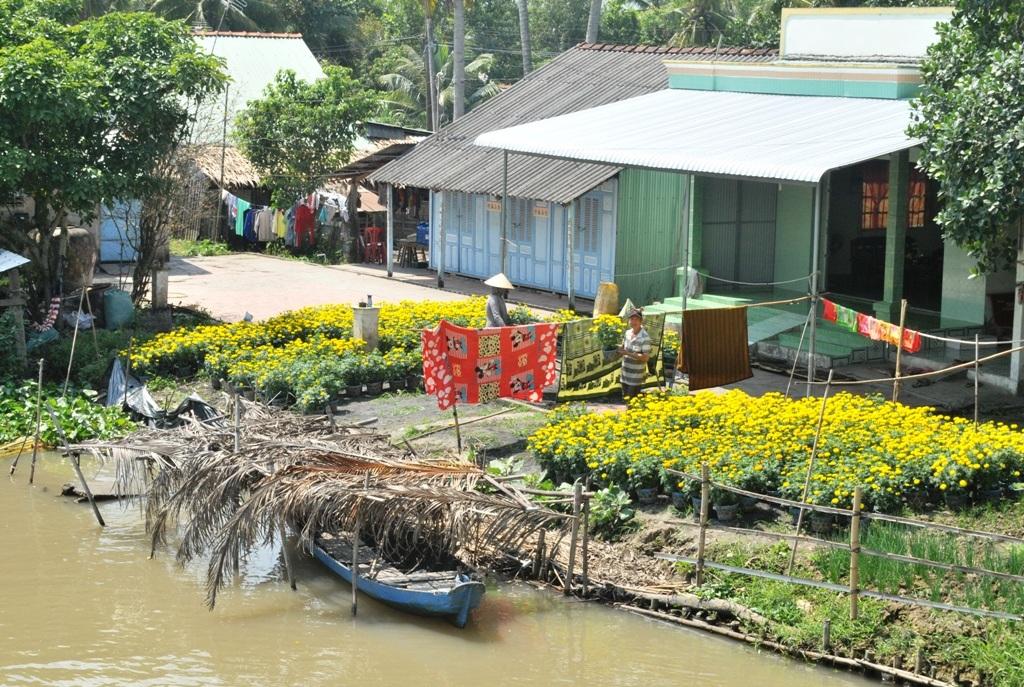 Tập kết xuống bến sông... chuẩn bị đưa hoa xuống vỏ để chuyển về thành phố