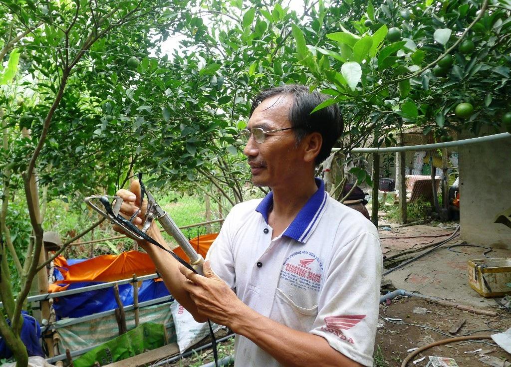 Anh Phú Thạnh thì đang tích cực chăm sóc vườn quýt còn hơn 1,5  tháng nữa mới có thể thu hoạch