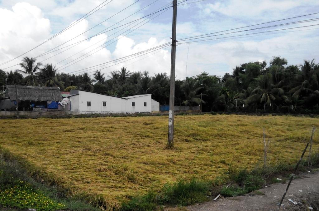 Theo thống kê của ngành nông nghiệp các tỉnh Kiên Giang, Đồng Tháp, Hậu Giang... đã có hàng ngàn ha lúa bị thiệt hại do đổ rạp vì mưa giông