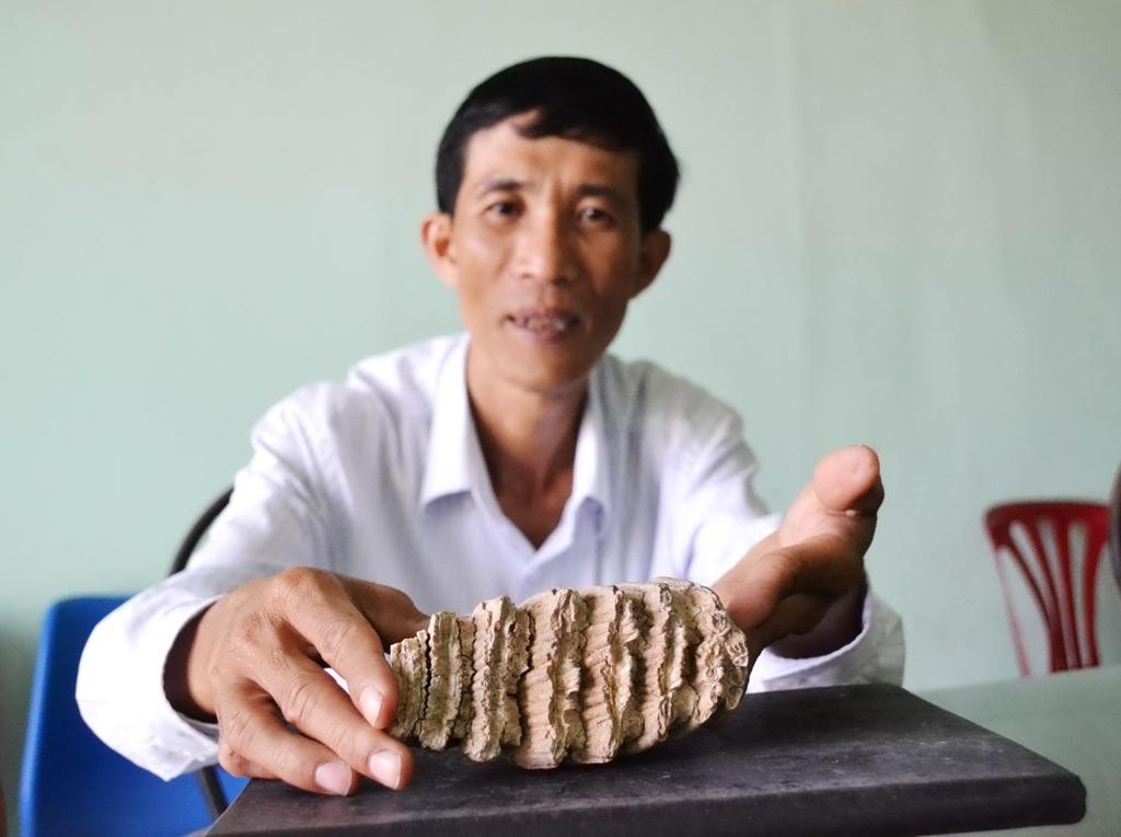 Hiện ông Triều bảo quản vật lạ nghi răng voi hóa thạch rất cẩn thận