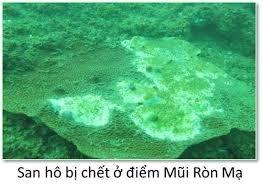 Chính phủ báo cáo kế hoạch phục hồi biển miền Trung, xử phạt Formosa - 2
