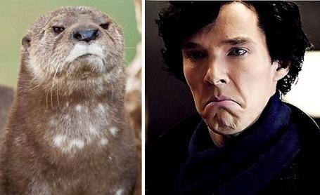 Bật cười với những biểu cảm hài hước của tài tử Oscar Benedict Cumberbatch - 7