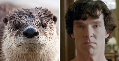 Bật cười với những biểu cảm hài hước của tài tử Oscar Benedict Cumberbatch - 9