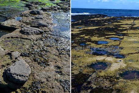 Phát hiện hàng trăm dấu chân khủng long thời cổ đại ở Scotland - 3