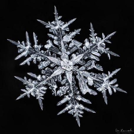 """Nhiếp ảnh gia mất 5 năm để """"săn"""" bức ảnh đẹp về tinh thể tuyết - 1"""