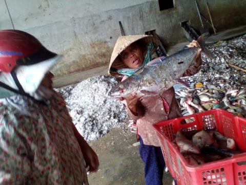 Trong 3 tháng qua, hoạt động sản xuất kinh doanh của người dân 4 tỉnh miền Trung bị ảnh hưởng nghiêm trọng do sự cố môi trường khiến cá chết hàng loạt
