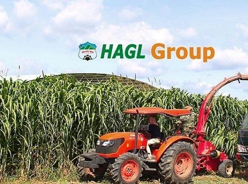 Cổ phiếu HNG của HAGL Agrico được niêm yết trên HSX kể từ tháng 7/2015