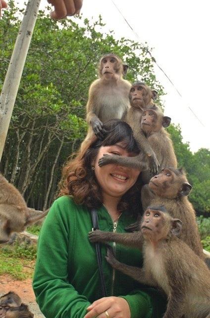 Một du khách bị khỉ vây kín.