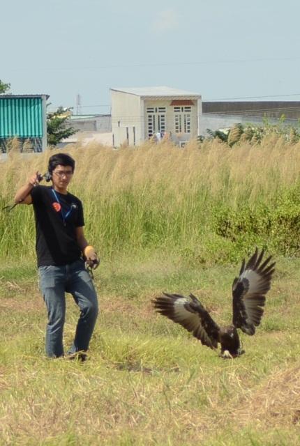 …cú chụp khá đẹp nhưng không được đánh giá cao do chim mồi đã chạm đất. Chim săn phải bắt mồi trên không thì mới đạt độ nhanh nhẹn tinh khôn.
