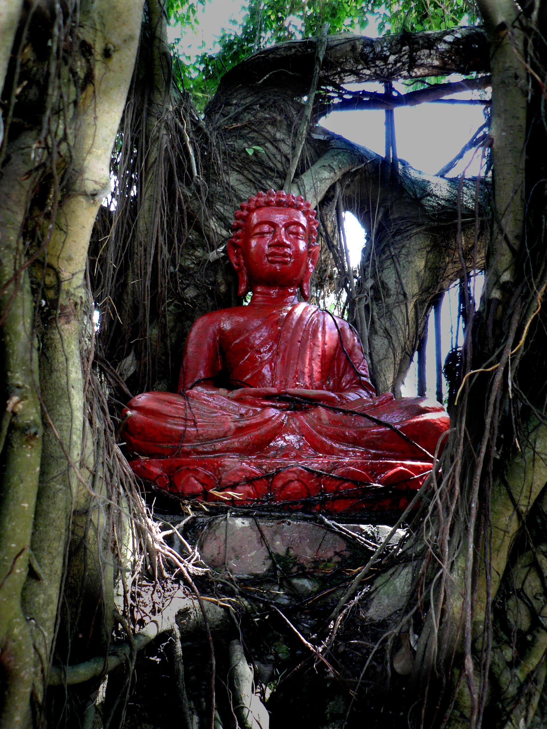 Tượng Phật cổ dưới gốc cây cổ thụ mang nét nghệ thuật tinh tế và cảm giác bình yên cho người chiêm ngưỡng.