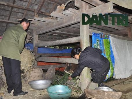 Nhiều hộ dân còn đun nước ẩm cho gia súc uống