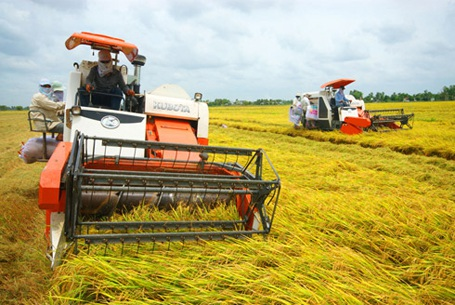 Nông dân tại nhiều địa phương ở Hà Tĩnh từng chịu mức giá gặt lúa cao ngất ngưởng do nạn bảo kê, cò mồi.