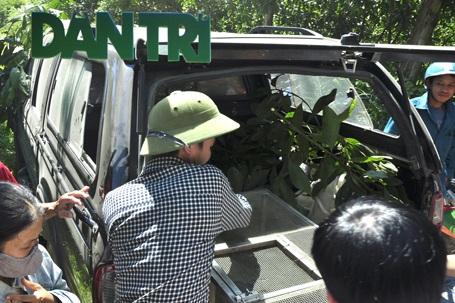 Đưa cá thể trăn lên xe về Trung Trung tâm Cứu hộ động vật hoang dã để cứu chữa.