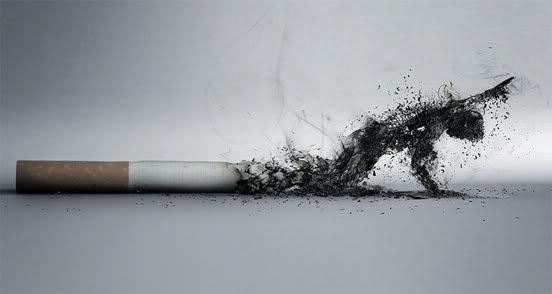 Thuốc lá chứa nhiều chất độc hại gây bệnh cho người hút chủ động và cả người hút thuốc lá thụ động.