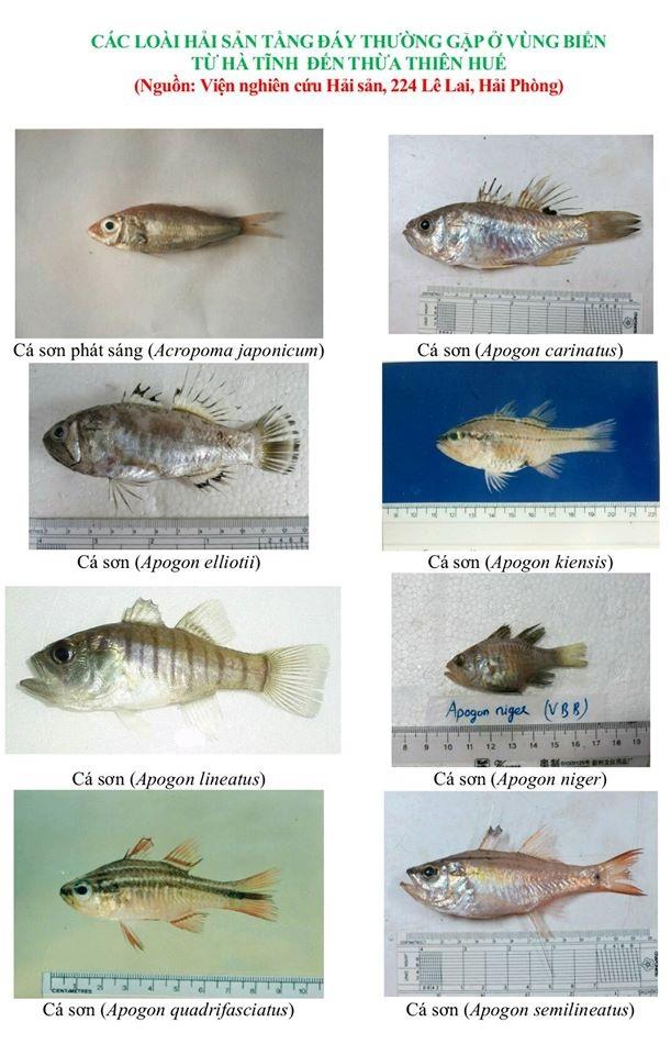 Nhận diện hơn 150 hải sản tầng đáy miền Trung khuyến cáo không sử dụng - 1