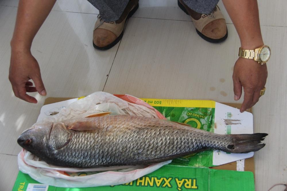 Con cá lạ được cho là giống cá sủ vàng của anh Nguyễn Văn Khánh.