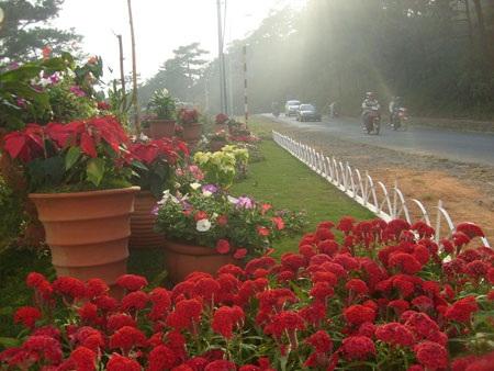Lâm Đồng muốn xây dựng Festival Hoa trở thành lễ hội cộng đồng của cư dân Đà Lạt