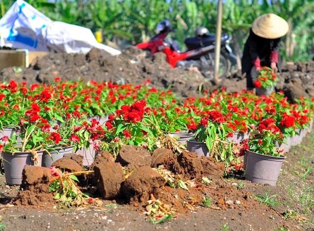 Gần 1.500 chậu hoa của gia đình bà Nguyễn Thị Huê bị kẻ gian đập bể chậu chỉ sau 1 đêm.