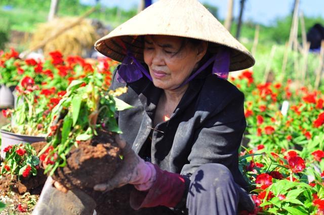Bà Nguyễn Thị Huê đau khổ nhìn những chậu hoa bị đập vỡ, cây hoa khô héo dần.