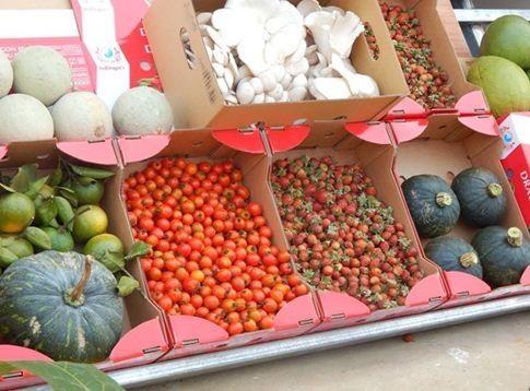Dâu tây, bí đỏ Nhật, cà chua, nấm… những sản phẩm sạch, tươi ngon đang được nhân rộng trên mảnh đất giàu vi chất của Kon Plông