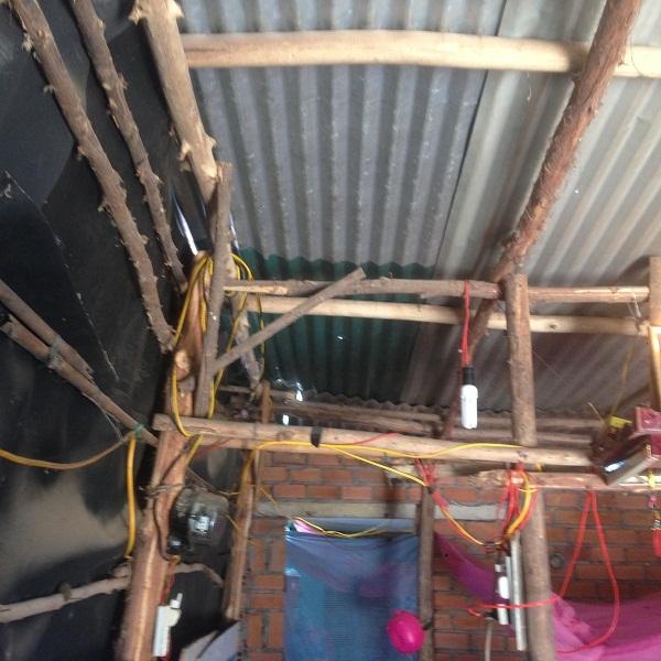 Căn nhà chắp vá tạm bợ từ thân cây đước, tôn và bạt nhựa
