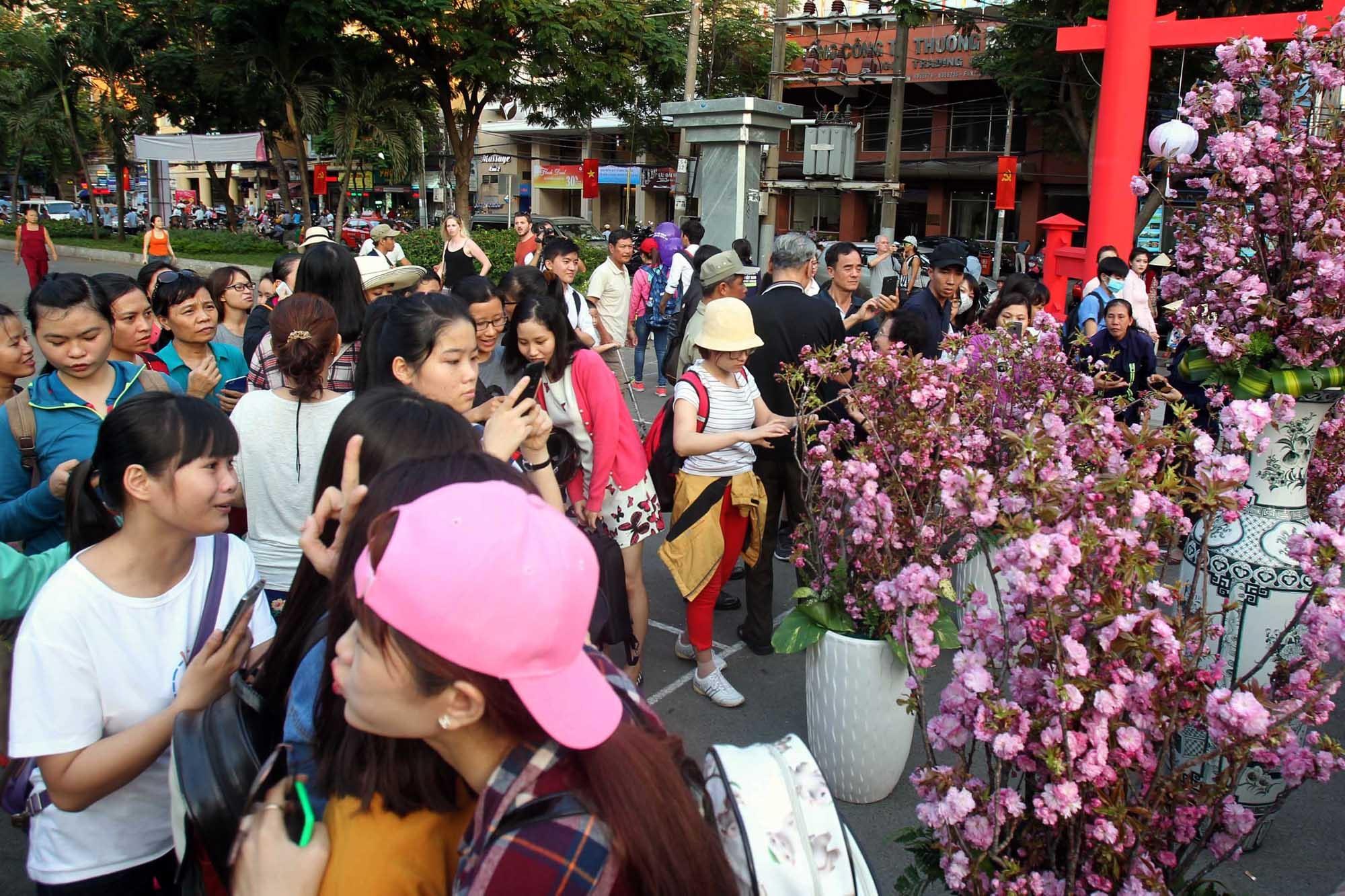 Hàng trăm người dân tại TPHCM tới chiêm ngưỡng hoa anh đào Nhật Bản tại công viên 23/9.