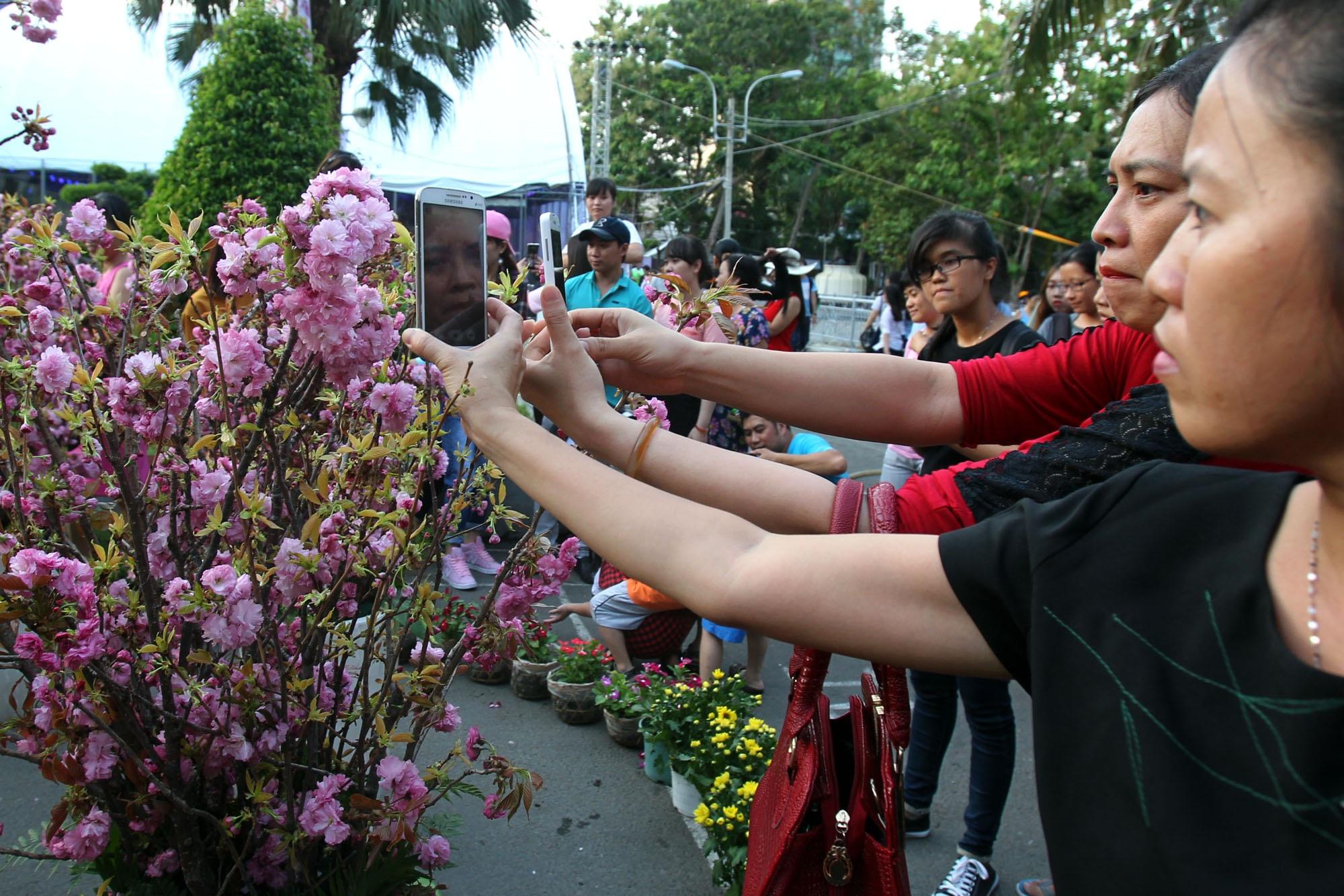 Người dân thành phố chụp hình lại những cành hoa anh đào đẹp mắt